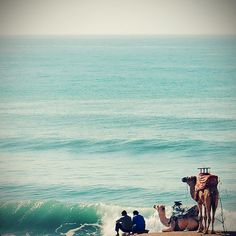 camels & the sea...
