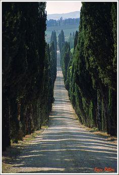 Chianti - I cipressi  a Villa Arceno, Castelnuovo Berardenga, Siena Tuscany