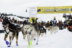 Yukon Quest #11 Sports Event Fairbanks, Alaska, to Whitehorse, Yukon