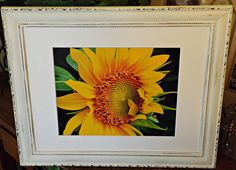 Shabby Chic decor,  Sunflower photo, Botanical photography, White distressed frame, White frame, Floral art, Yellow and white, Cottage art