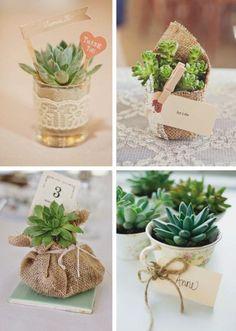 Las suculentas son las plantas de moda. Muchos se animan a darlas como detalle de boda. ¿Te gustan?