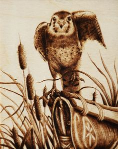 """Canoe Flight"" Kestrel taking off from the front of a canoe among the reeds; Cara Jordan animal pyrography"