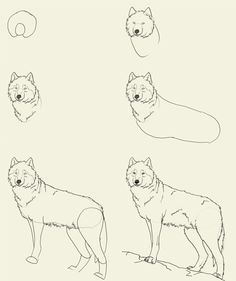 drawing for girls | how to draw a wolf.