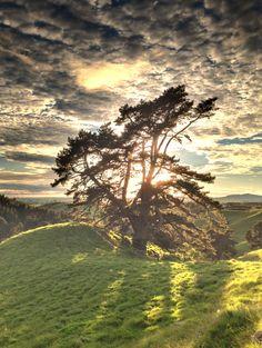 Un arbre, un seul et comme fond les nuages. Charmant!