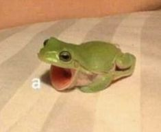 Baby Animals, Funny Animals, Cute Animals, Frog Pictures, Funny Pictures, Stupid Funny Memes, Haha Funny, Top Funny, Cute Frogs