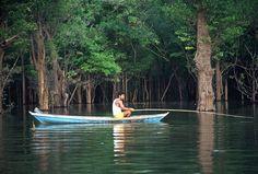 Manaus, Brazil (The Amazon Rain Forest)