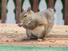 Joy's Jots, Shots & Whatnots: Wordless Wednesday #67~ Squirrels NOT Allowed
