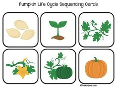 ** Please Note: This Pumpkin Life Cycle Set is included in my BIG pack of Life Cycles. Only purchase this set if you do not want the whole pack of life cycles. Find the big Life Cycles Set here.