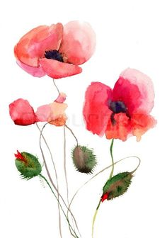Watercolor poppies red learning how to paint watercolor poppies picture of stylized poppy flowers illustration watercolor flowers stock photo images and stock photography mightylinksfo