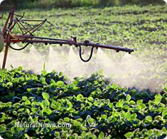 Agriculture experts sounding the alarm over massive spread of superweeds due to GMOs, glyphosate