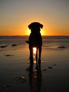Best Buddy Sunset