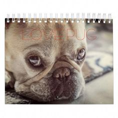 See our site for more details on It is a great area to find out more. White Pug, Black Pug, Pug Quotes, Funny Quotes, Fat Pug, Pug Facts, Pugs For Sale, Pug Accessories, Pugs In Costume