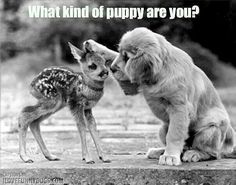 What kind of puppy are you?