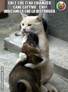 Clicca sull'immagine per visitare il sito. #Animali, #Cani, #Gatti #Divertenti, #Funny, #Funnypics, #Humor, #Humour, #Immagini, #Immaginidivertenti, #Italiane, #Lol, #Meme, #Memeita, #Memeitaliani, #Memes, #Memesita, #Memesitaliani, #Pics, #Umorismo, #Vignette, #VignetteitalianeIt