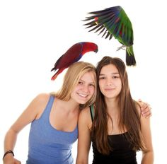 Why do Eclectus parrot moms peck their sons to death?