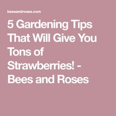 5 Gardening Tips That Will Give You Tons of Strawberries! - Bees and Roses