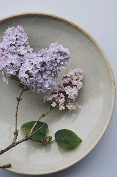 lilacs in liquid nitrogen | anna thomas