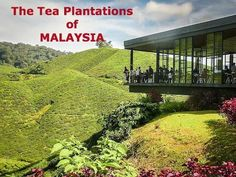 The Cameron Highlands of Malaysia are a cool oasis from the hot, humid lowlands…