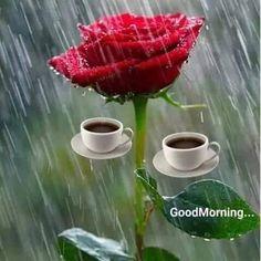 Rainy Good Morning, Good Morning Thursday, Good Morning Msg, Good Morning Coffee, Good Morning Picture, Good Morning Messages, Good Morning Greetings, Morning Pictures, Good Morning Images