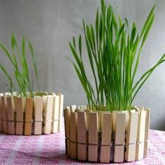 Unique flower pot or container ideas  pegs