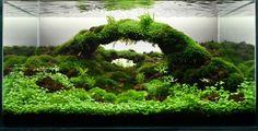 Impressive Design Of Aquascape Aquarium - Use J/K to navigate to previous and next images