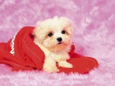 En Tatlı Yavru Köpekler