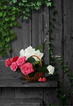 Beautiful Flowers Dp For Whatsapp - BestChristmasDeals. Flowers Dp, Beautiful Flowers Photos, Flower Photos, Beautiful Roses, Pretty Flowers, Beautiful Images, My Flower, Flower Power, Splash Photography