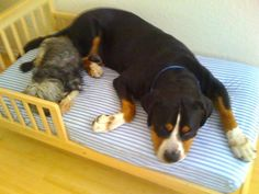 Keep Austin Dog Friendly: Mouse's New dog bed