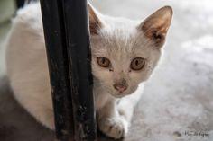 Cat in spooky town