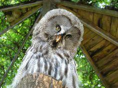 Bart Owl, Weird Bird, Animal World Cute Girl Names, Weird Birds, Cute Instagram Captions, Cute Easy Drawings, Safari Adventure, Owl Pictures, Anime Girl Cute, Weird Creatures, Cute Guys