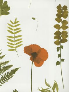 BOTANICA Clarke and Clarke Wallpaper - a pretty #botanical #wallpaper featuring leaves and poppies #homedecor #leaves #poppies