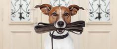 Hond aan de riem of los laten lopen?