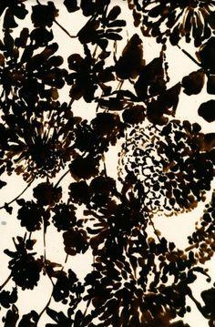 Nature from Luli Sanchez