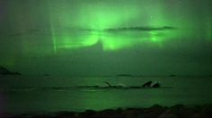 A photographer captured spectacular video of a group of humpback whales swimming under the northern lights off the coast of Norway.