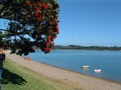 Paihia, Bay of Islands New Zealand