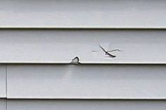 home repair Repairing Damaged Vinyl Siding. Detailed tutorial on how to replace siding and how to find a match to your siding.