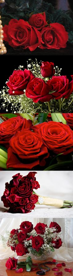 Red roses for Beautiful Life