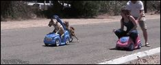 http://www.funnyordie.com/lists/2827e4d7a7/21-best-gifs-of-all-time-of-the-week-volume-9