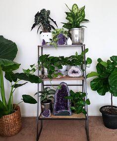 #plant and #crystal addiction. It's a problem..... #homedecor #houseplants #amethyst #spiritquartz #cactusquartz #selenite #fiddleleaf #fiddleleaffig #ficuslyrata #philodendron #pothos #uoaroundyou #uohome #fpme #Freepeople #anthropologie #jungalow #jungalowstyle #minerals #currentdesignsituation #bohohome #bohemian