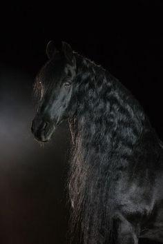 fries paard mooi op de foto gezet