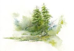 Pine Tree study by Steve Mitchell