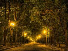 Night alley - Olaf rennt um sein Leben entlang einer Baumallee wie diese, aber in Kaliningrad