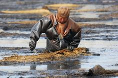 Man In Oil Slude In Liaonin Province.A fisherman wades through the oil spill in Dalian.