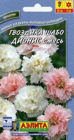 Aednelk ''Dionis'' (mix) Dianthus caryophyllus