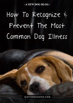 Do YOU know the warning signs? http://theilovedogssite.com/how-to-recognize-prevent-one-of-the-most-common-dog-illnesses/?src=PIN_RCH_MostCommonIll_2-17-14