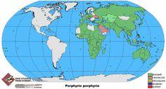 pollo sultano Porphyrio porphyrio