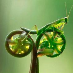 Pasión por el ciclismo!