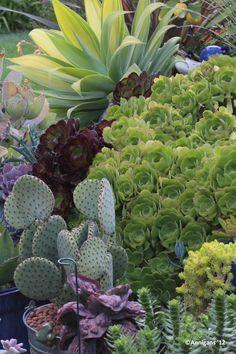 Succulent Row. Photo by Ann DuMont