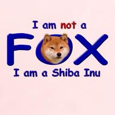 haha I feel like I have to explain this to someone at least once a day. Shiba Inu life