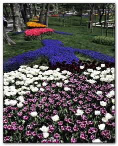It's tulip time again - II - Emirgan, Istanbul